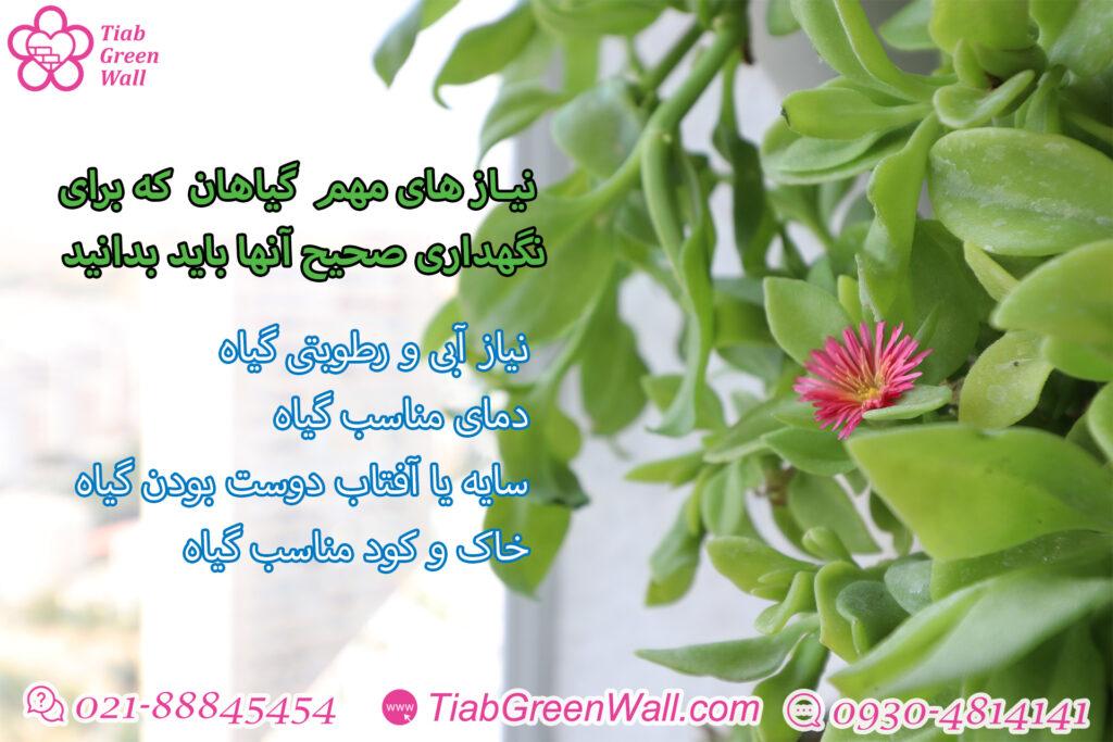 گیاهان دیوارسبز